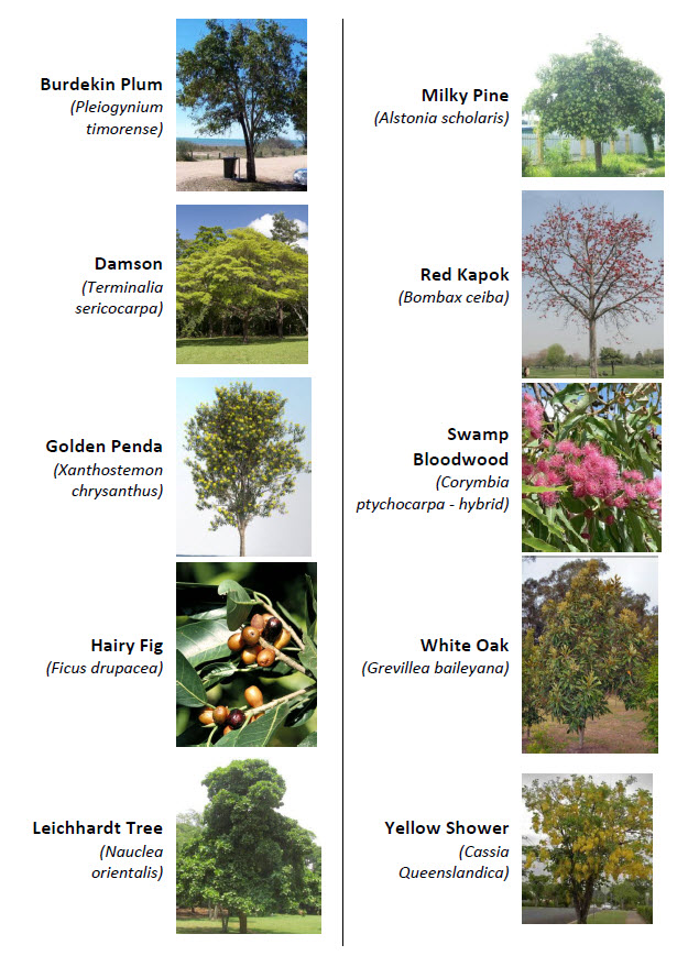 Final Tree Candidates